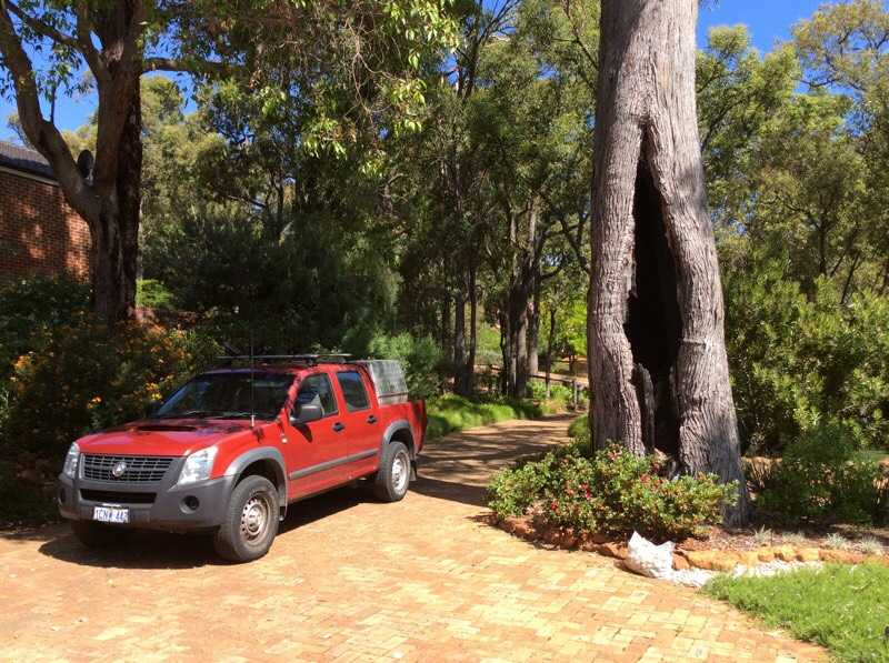 Veteran Jarrah survived fire, white ants and bad pruning for 130 years
