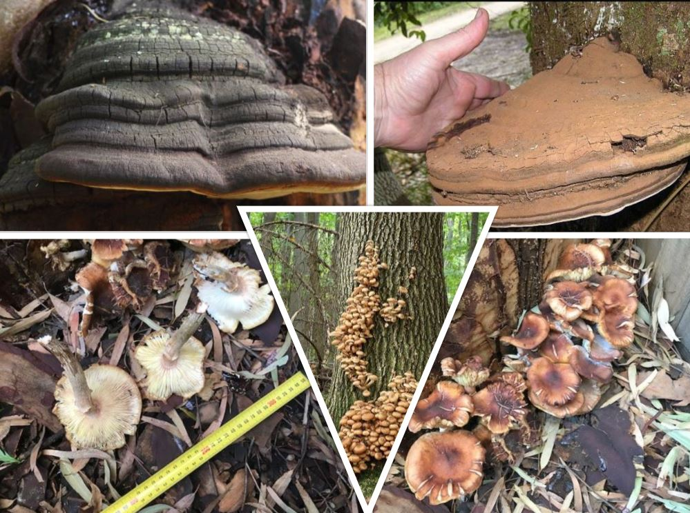 Fungi can causes diseases that harm trees