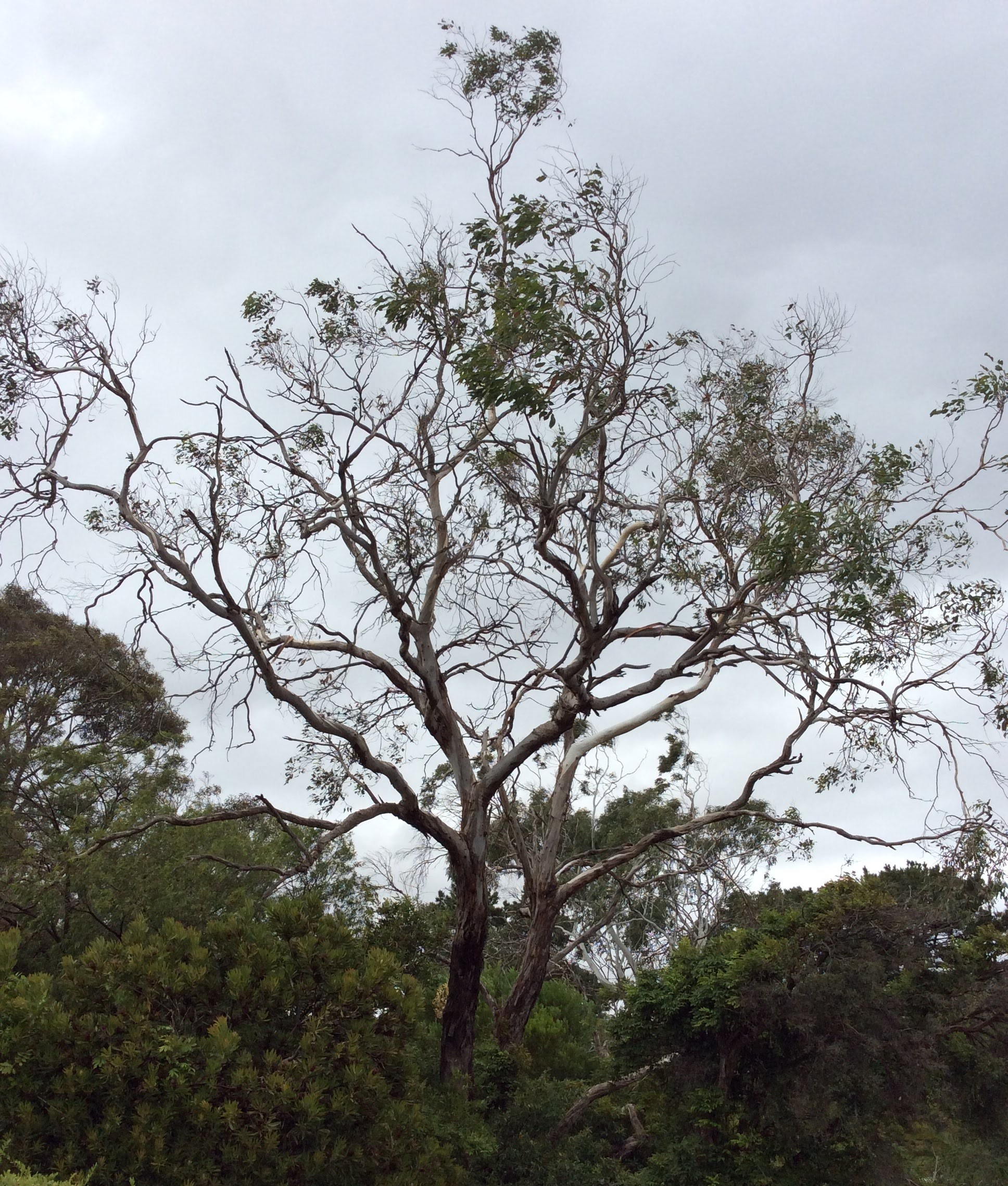 Don't let the pests or diseases which cause dieback ruin your beautiful trees